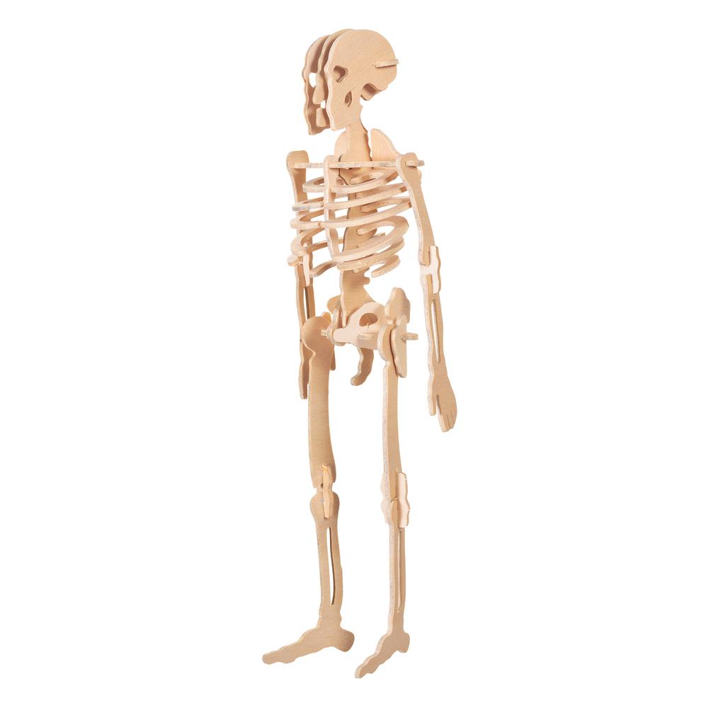 Bygg Människo-Skelett
