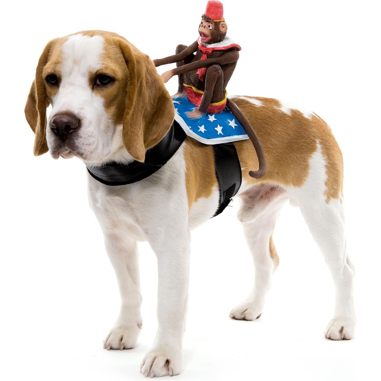 Dog Riders - Monkey