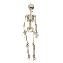 Hängade Skelett 90 cm