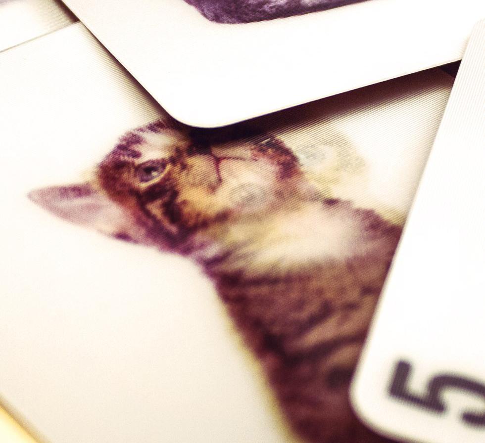 3D Kortlek Katter