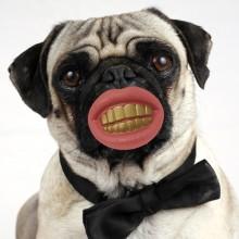 Pimp Hund tuggningsleksak