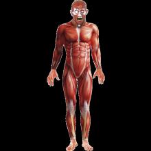 Mänsklig anatomi-dräkt