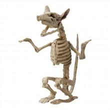 Skelett Råtta