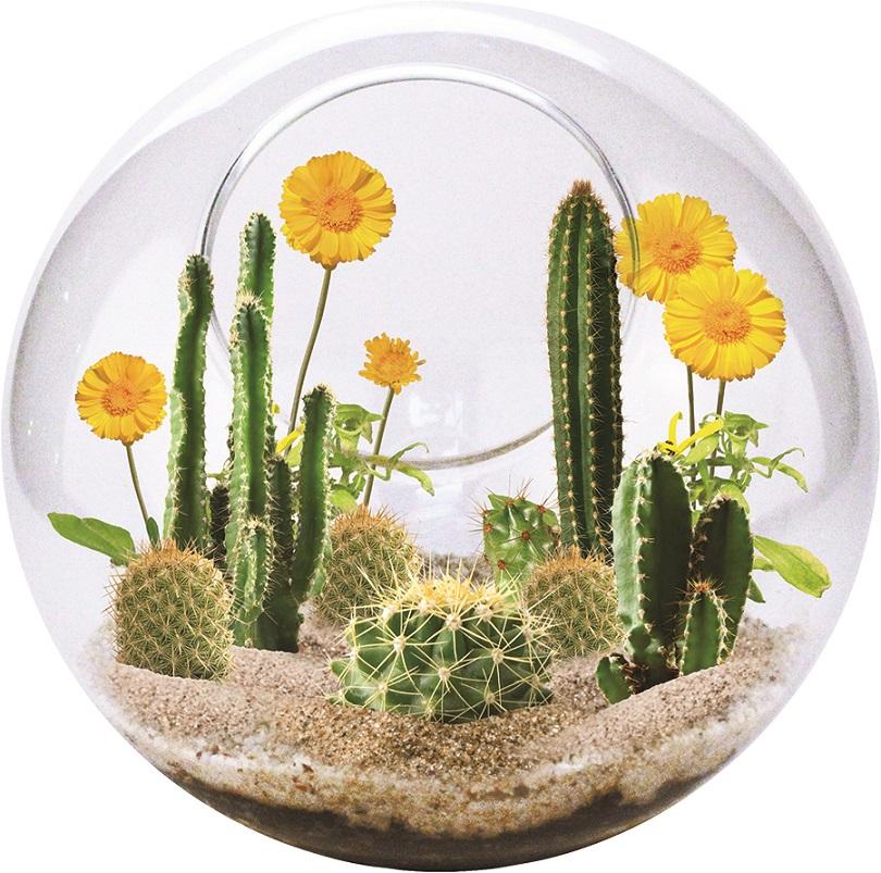 Mini Öken Terrarium
